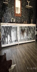 bench steigerhout